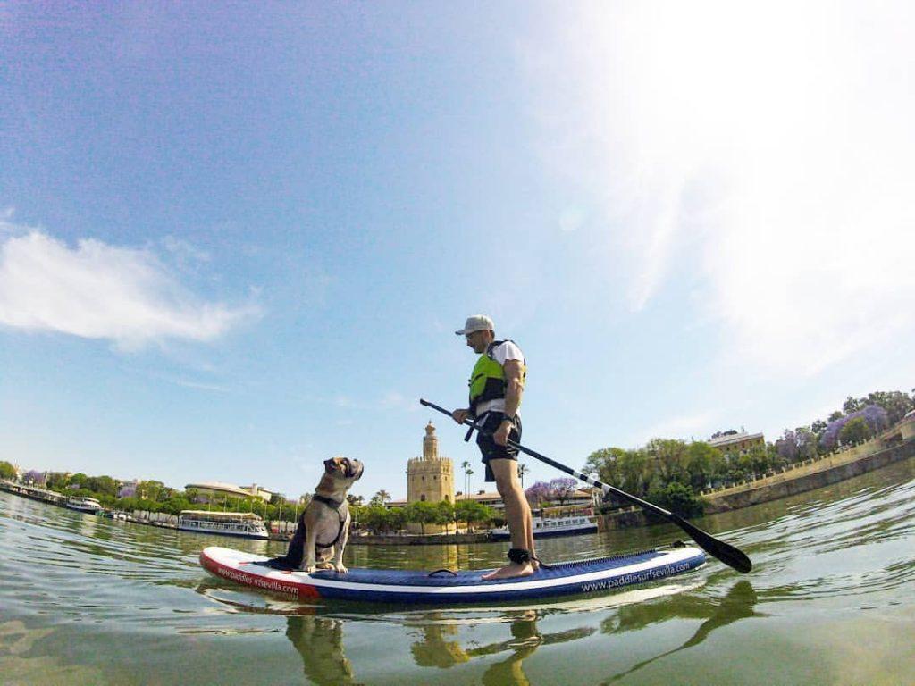 SUP DOG Paddle Surf Perros Sevilla